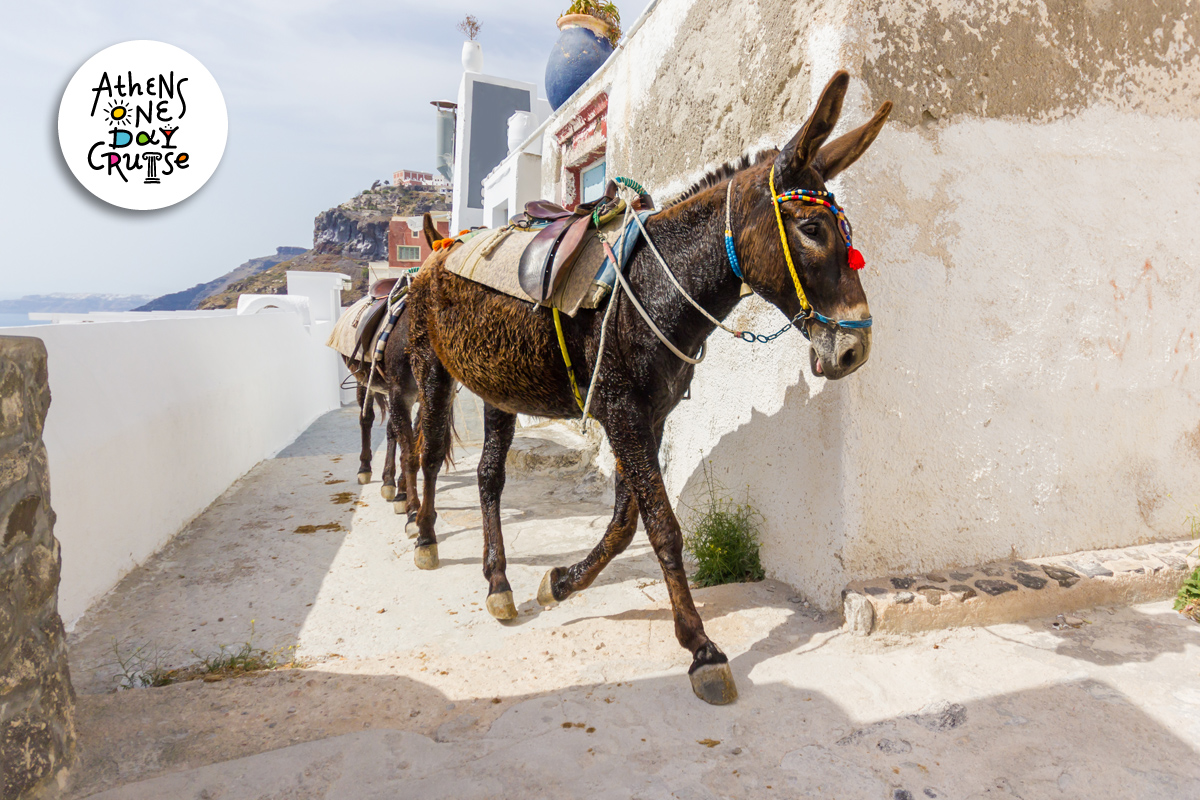 The donkeys of the Saronic Gulf | One Day Cruise